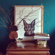 Caracal Cat 30x40 Ikea Frame