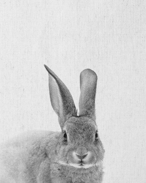 Rabbit_P