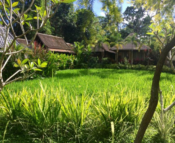 my-village