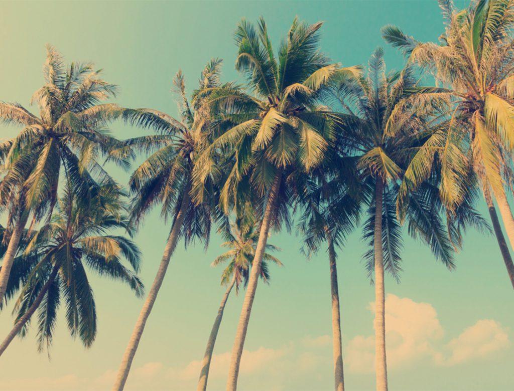 Paradise Found - Vintage Palms